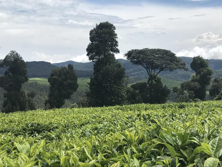 Burundi panorami